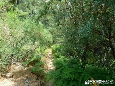 Pinares de la Angostura en Piedralaves;viajes julio pedriza rutas viajes de trekking